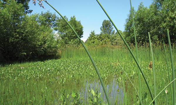 North Seattle College wetlands